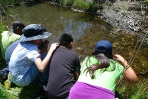 Nearby elementary students explore aquatic life in Rose Creek as part of Friends of Rose Canyon's Sense of Wonder Program.