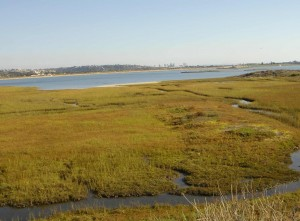 The Kendall Frost marsh is located near the mouth of Rose Creek where the creek enters Mission Bay. It is an ecological treasure managed by the University of California.