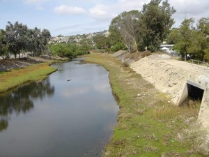 Storm drain into Lower Rose Creek. Photo: San Diego Earthworks