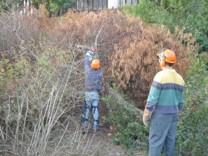 Brush clearing in Rose Canyon by members of the Rose Canyon Recreation Council. Photo: San Diego Earthworks