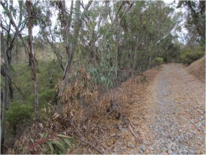 "Eucalyptus trees created a ""dead zone"" along this slope of Rose Canyon where no native plants or animals could be found."